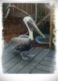 Key Largo Bird Sanctuary. This is one of the many birds to come encounter with Stock Photos
