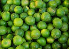 Key Limes, Fresh from the Tree Royalty Free Stock Photography
