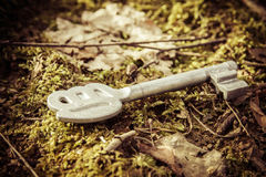 Key on moss Stock Image