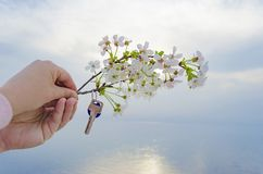 The key to the new house and the branch of cherry blossoms in hand. The key is from a new house and a cherry blossom branch in hands on a sunset background Royalty Free Stock Photos