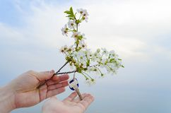 The key to the new house and the branch of cherry blossoms in hand. The key is from a new house and a cherry blossom branch in hands on a sunset background Royalty Free Stock Photography