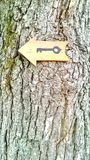 Key sign on tree Royalty Free Stock Image