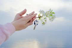 The key to the new house and the branch of cherry blossoms in hand. The key is from a new house and a cherry blossom branch in hands on a sunset background Royalty Free Stock Image