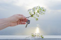 The key to the new house and the branch of cherry blossoms in hand. The key is from a new house and a cherry blossom branch in hands on a sunset background Stock Images