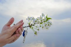 The key to the new house and the branch of cherry blossoms in hand. The key is from a new house and a cherry blossom branch in hands on a sunset background Stock Photos