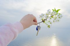 The key to the new house and the branch of cherry blossoms in hand. The key is from a new house and a cherry blossom branch in hands on a sunset background Royalty Free Stock Images