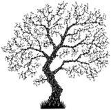 Key Tree Stock Photo