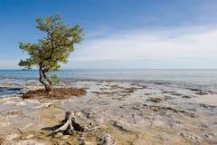 Key West beach scene Stock Photo