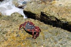 Key West crab Stock Photo