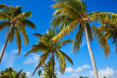 Key west florida beach Clearence S Higgs Stock Photo