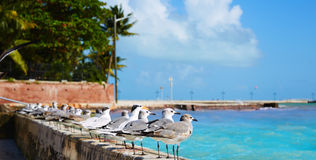 Key west florida beach Clearence S Higgs Royalty Free Stock Photo