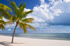 Key West Florida, beautiful summer beach landscape. With ocean and palm trees Stock Images