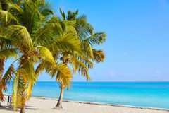 Key west florida Smathers beach palm trees US. Key west florida Smathers beach palm trees in USA Stock Photos