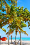 Key west florida Smathers beach palm trees US Royalty Free Stock Images
