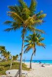 Key west florida Smathers beach palm trees US Royalty Free Stock Images