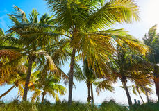 Key west florida Smathers beach palm trees US Royalty Free Stock Photography