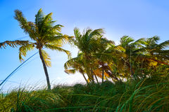 Key west florida Smathers beach palm trees US Royalty Free Stock Photos