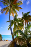 Key west florida Smathers beach palm trees US Stock Photo