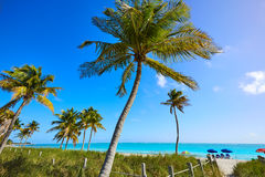 Key west florida Smathers beach palm trees US Stock Image