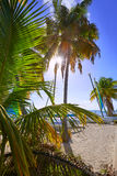 Key west florida Smathers beach palm trees US Royalty Free Stock Photos
