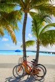 Key West florida strandrensning S Higgs Royaltyfria Foton