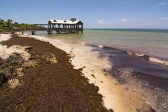 Key West gałęzatki plaża zdjęcia stock