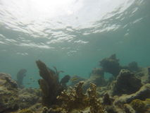 Key West naturale Immagini Stock Libere da Diritti
