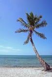 Key West-Palme allein Stockbilder