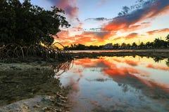 Key West solnedgång - Florida tangenter - reflexioner i mangrovar Royaltyfri Bild