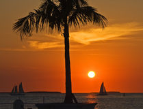 Key West sunset. Sunset view with palm tree and sailboats from dock near Mallory Square, Key West, Florida Stock Photography