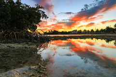 Key West Sunset - Florida Keys - Reflections in Mangroves Royalty Free Stock Image
