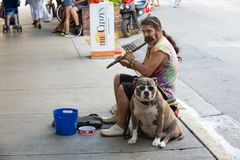 Street musian or man playing flute with dog in USA. Key West, USA-december 26. 2015 : Street musian or man playing flute with dog in Key West, USA. Busker Stock Photography