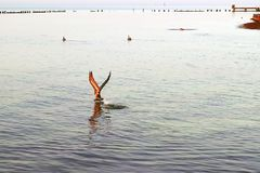 Key West-Zeemeeuw Stock Fotografie
