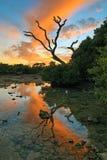 Key West-Zonsondergang - de Sleutels van Florida - Dode Boom Stock Fotografie