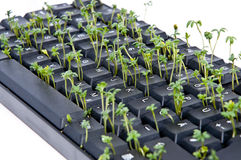 Keyboard with garden cress Stock Images