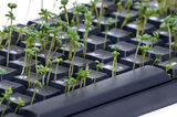 Keyboard with garden cress Stock Photo