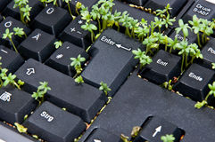 Keyboard with garden cress Royalty Free Stock Photo