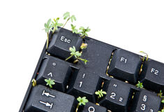 Keyboard with garden cress Stock Image