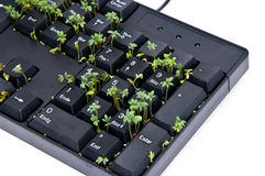 Keyboard with garden cress Royalty Free Stock Image