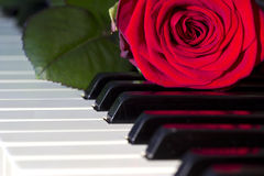 Keyboard with a rose. Beautiful red rose on a piano keyboard Stock Photography