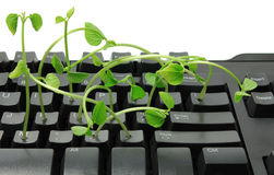 Keyboard with Sprouts Stock Photos