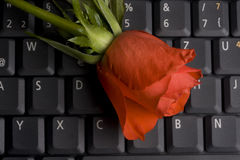 Keyboardflower. Red rose on a notebook computer keyboard Royalty Free Stock Image