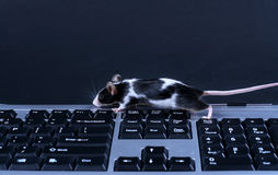keybord鼠标 库存图片