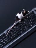Keybord e mouse Fotografia Stock Libera da Diritti
