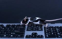 Keybord e rato Imagens de Stock