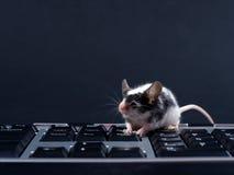 Keybord en muis stock foto's