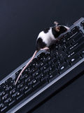 Keybord et souris Photo libre de droits