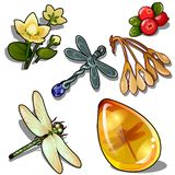 Keychain dragonfly, insect amber, flower and red berry. Natural set of six icons isolated. Vector. Keychain dragonfly, insect amber, flower and red berry stock illustration