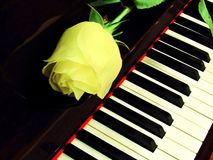 Piano keys whith rose royalty free stock image