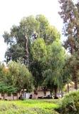 Kfar Saba стоковые изображения rf